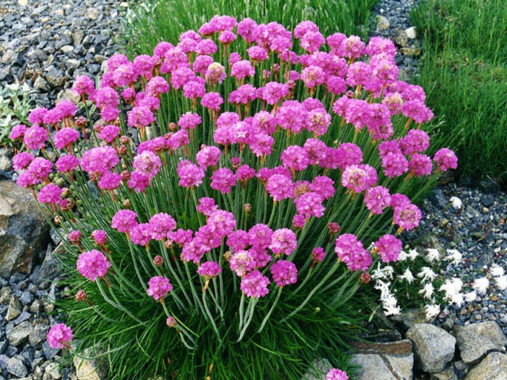 Viveros eden agua mineral eden 1982 2016 cubresuelos for Arbustos perennes para jardin