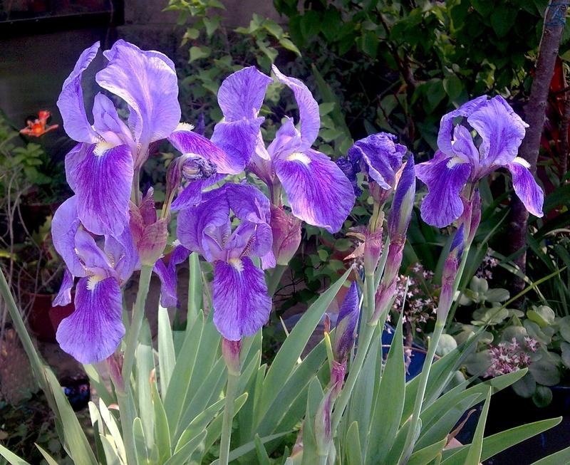 flores de bulbo